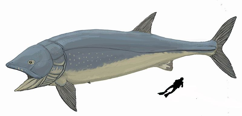 Leedsichthys problematicus the largest bony fish for Types of bony fish