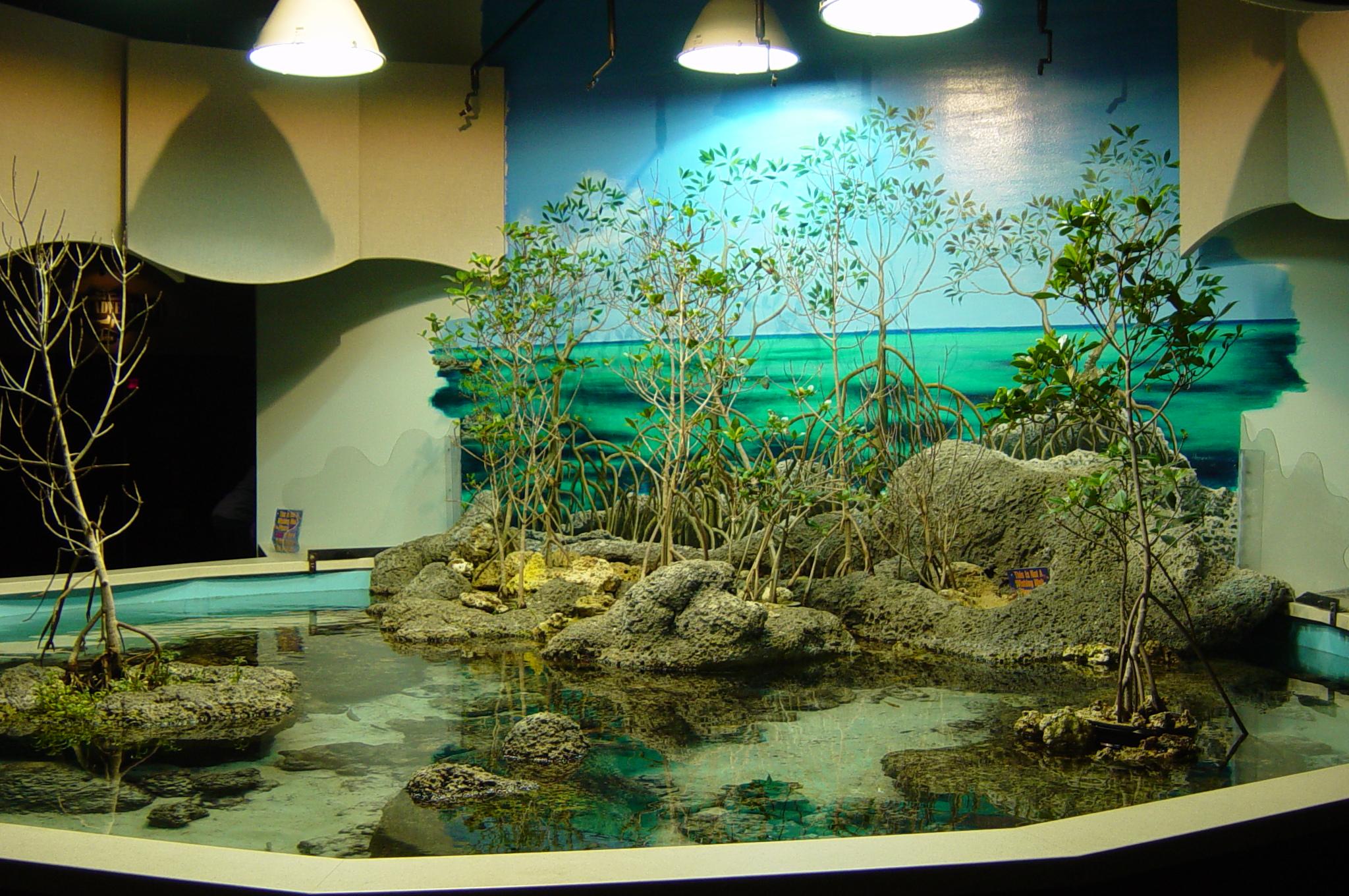 Freshwater aquarium fish ecosystem - I