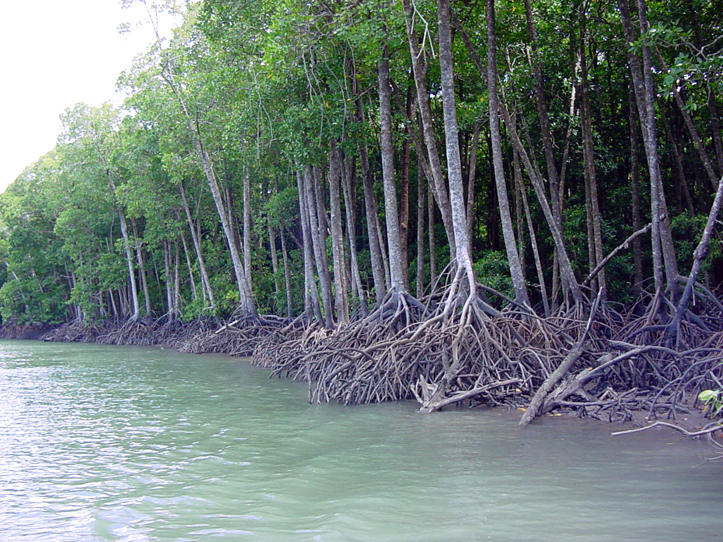 mangrove forest Mangrove forests supply us with various ecosystem services from natural storm protection to fisheries enhancement and provide important habitats for animals.