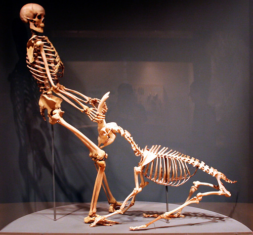 skeleton people once existed!? [archive] - the raven, Skeleton