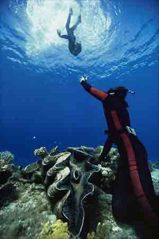 The giant clam ferrebeekeeper for Another word for ocean floor