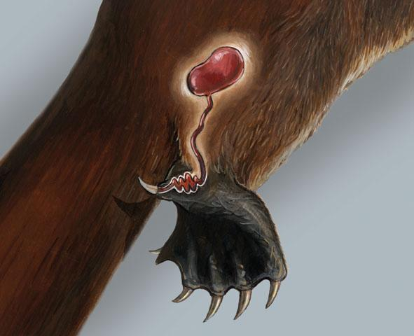 poison platypus