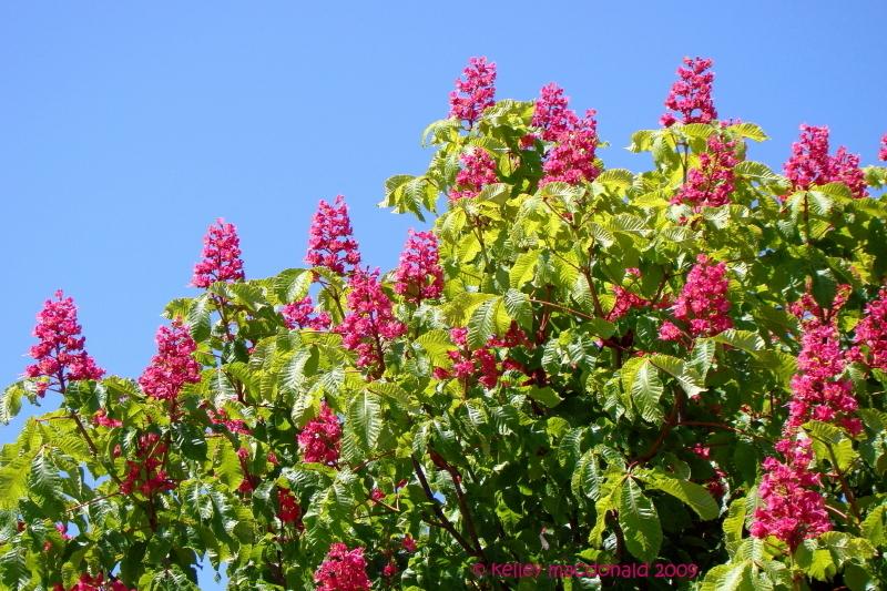 essay on spring season