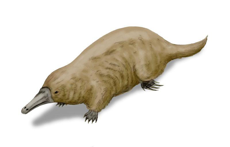 Afbeeldingsresultaat voor Teinolophos