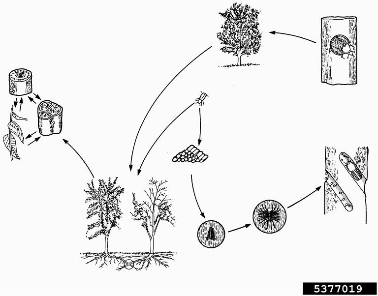 Image Result For Life Cycle Of Century Plants