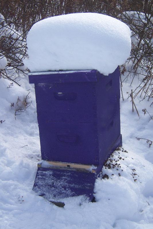 Honey Winter