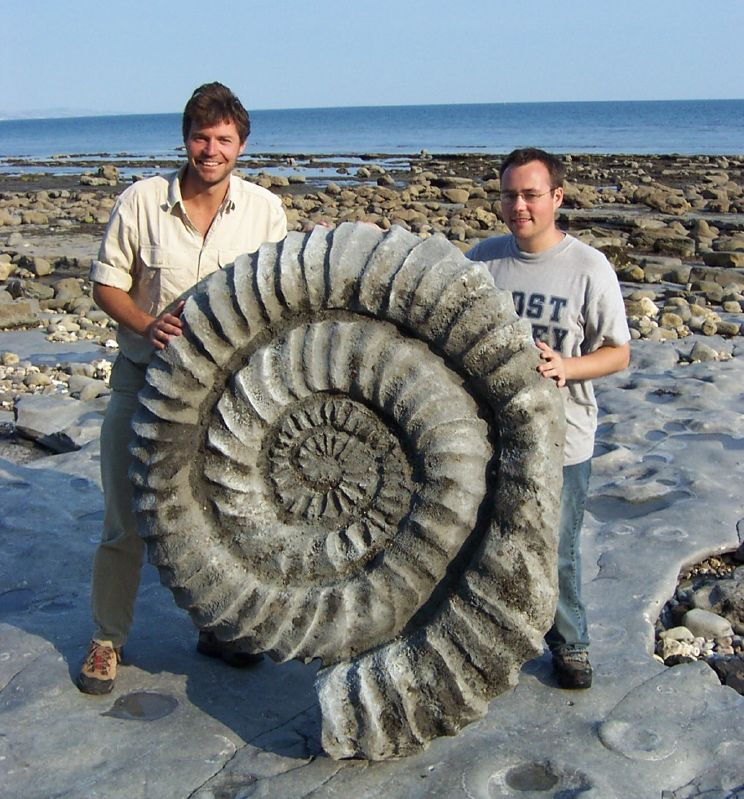 Giant Ammonite Fossils...