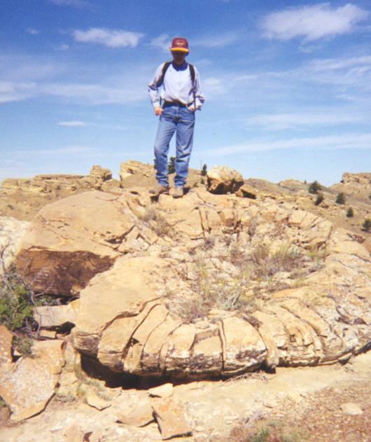 where are ammonite fossils found