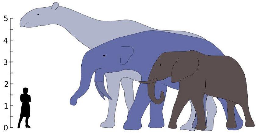 Comparison Size Blue Whale Elephants