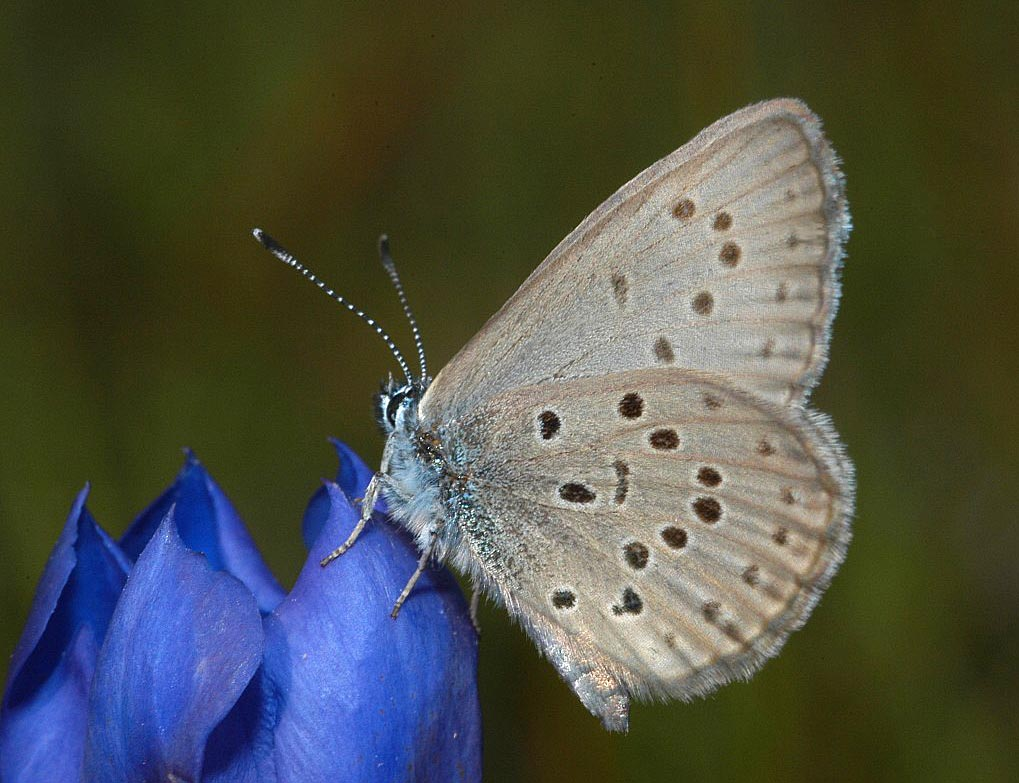 Butterfly - photo#51