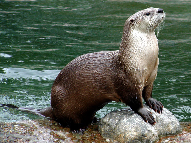 hindu singles in otter Below is a growing visual guide to religious symbols of the world click on the image or link for information on the symbol's history, meaning and use.