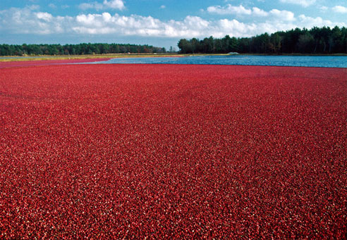 Cranberry Bog Tours (Harwich) - 2019 All You Need to Know ...