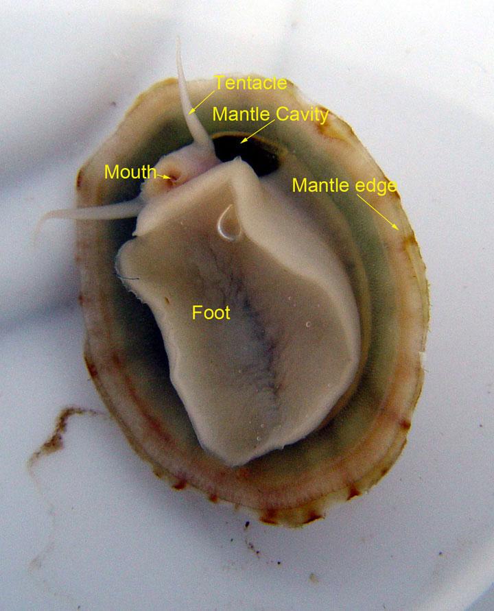 Anatomy of the patella