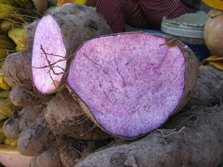 Purple Yam