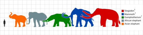 800px-Elephantidae-scale.svg