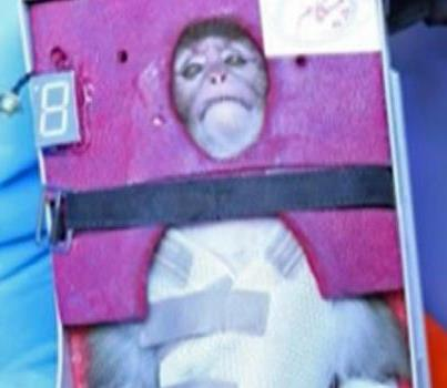 A gray-tufted monkey traveled to the edge of space according to Iranian media