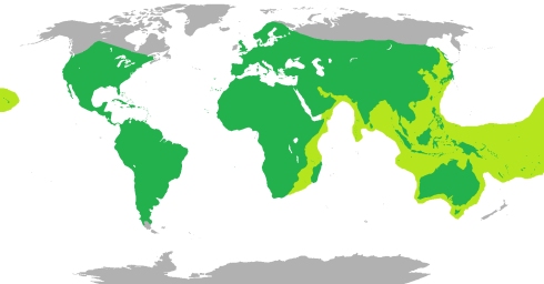 The worldwide range of all snakes