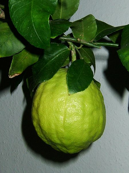 The Citron Fruit (Citron Medica)