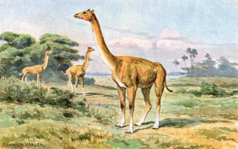 Aepycamelus (painting by Heinrich Harder)