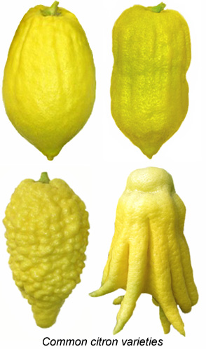 Varieties of Citron Fruit
