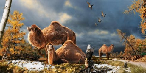 An artistic reconstruction of the newly discovered Arctic camels