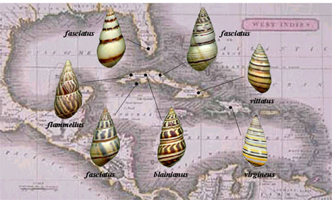 Liguus Map