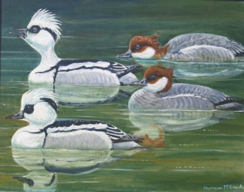 Smew party (Norman McCanch, 2011, oil)