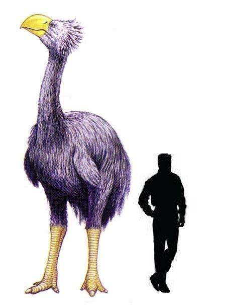 Bullockornis (with human-size silhouette for comparison)