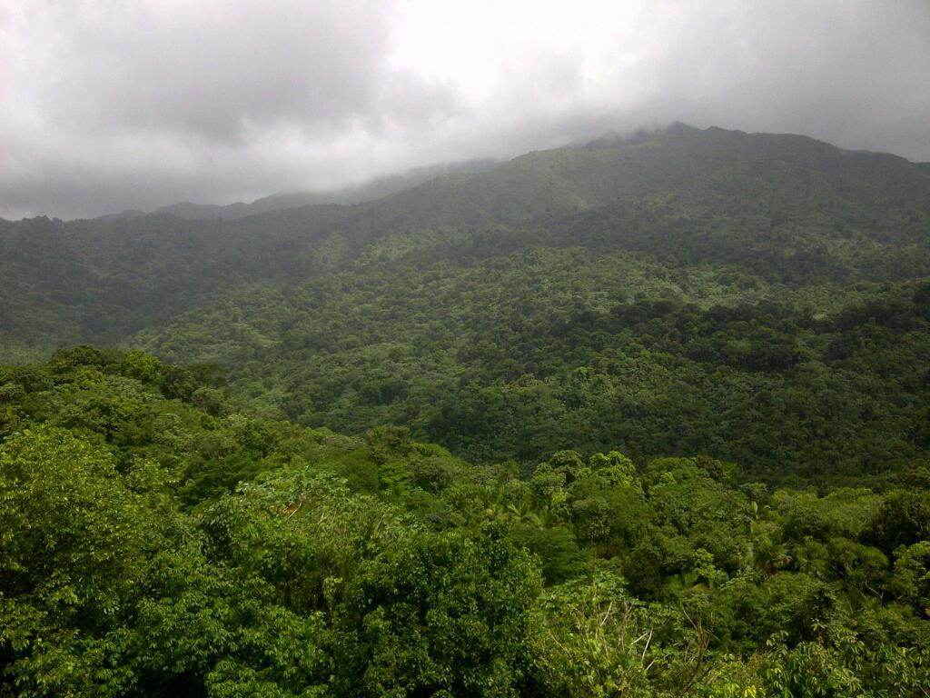 El Yunque Tropical Rain Forest in Puerto Rico
