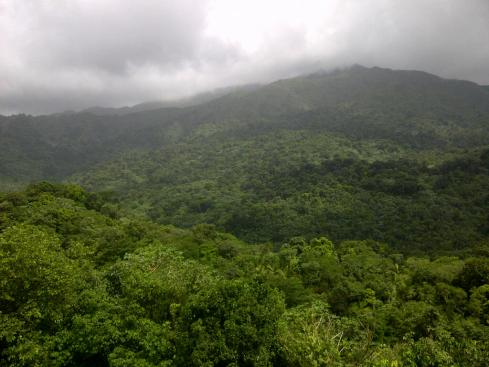 El Yunque Tropical Rain Forest in Puerto Rico