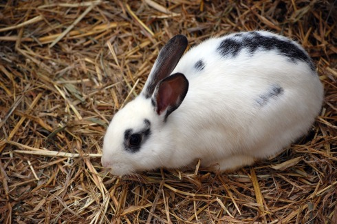 Rabbit-with-spots1220
