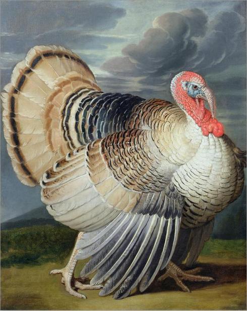 Turkey (Johann Wenzel Peter)