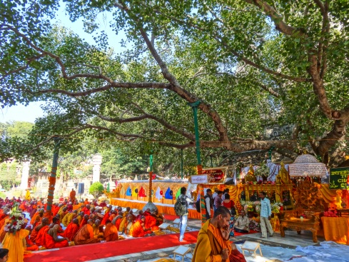 The Bodhi Tree at Bodh Gaya (photo by Nezzen, 2012)