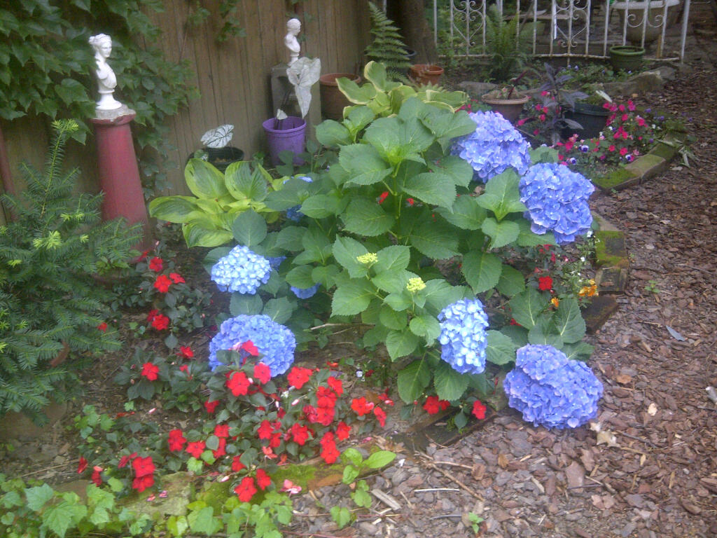 My garden in Brooklyn at the end of June.