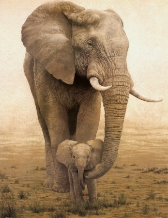 African bush elephant (Loxodonta africana) with calf