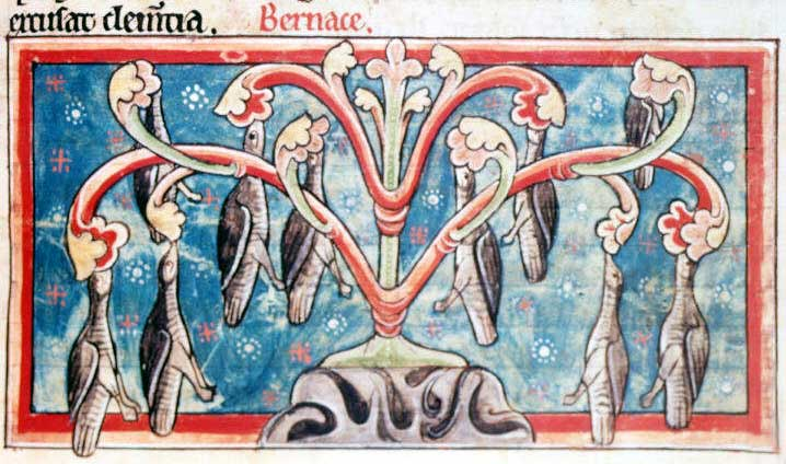 An ancient illuminated manuscript from the British Library shows the supposed birth of barnacle geese