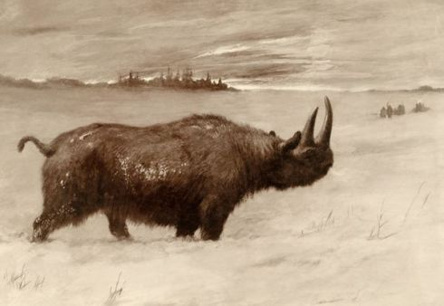 Wooly Rhinoceros (Illustration by Charles R. Knight, National Geographic)