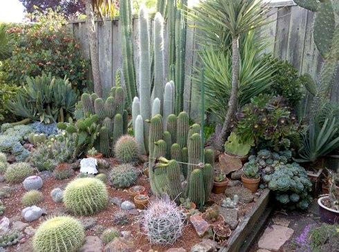 Berkeley Cactus Garden