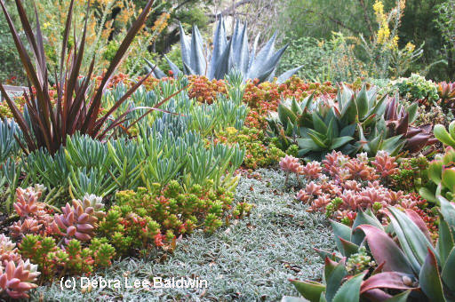 Debra Lee Baldwin created this garden from cuttings from friends!