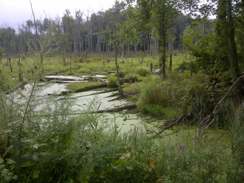 A fen (or carr, or tarn, or bog?) by New Paltz, New York