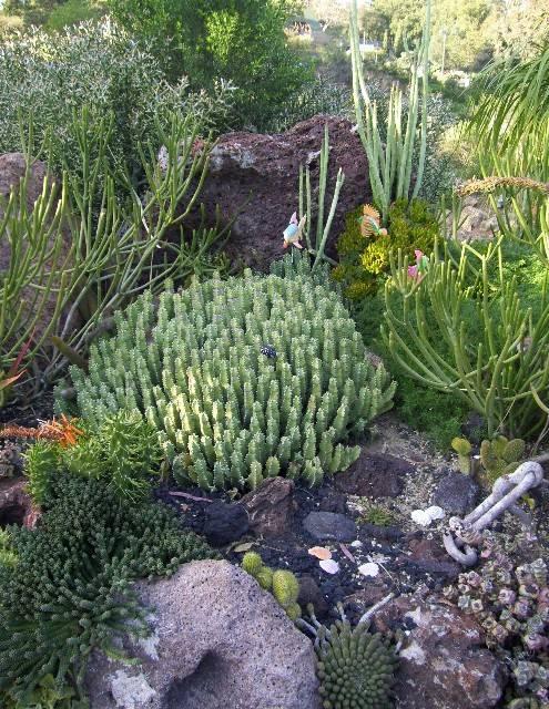 Succulent gardens ferrebeekeeper for Cactus garden designs