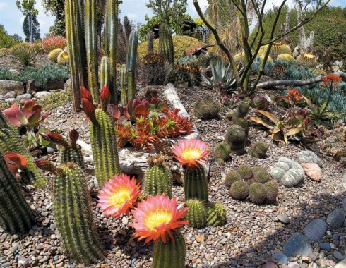 The H Warren Buckner Cactus and Succulent Garden