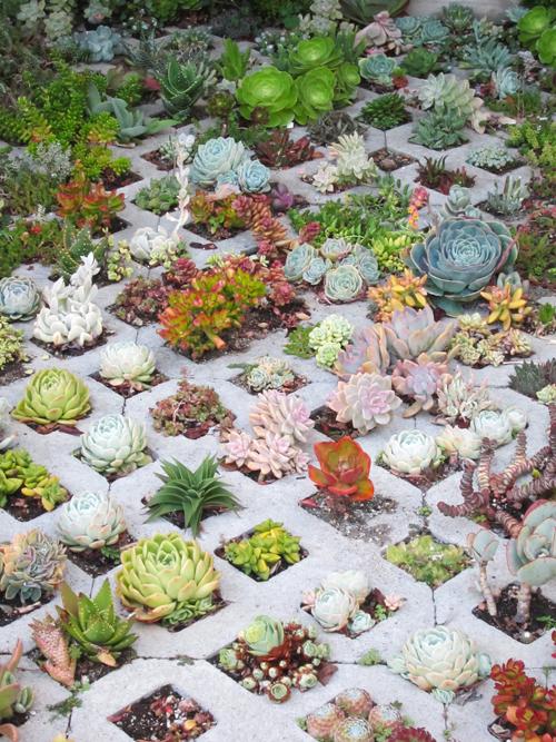 Succulent Gardens