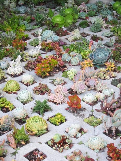 SucculentBlog