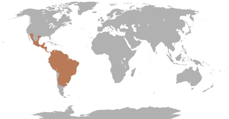 Worldwide Peccary Range