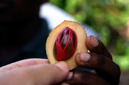 A nutmeg fruit