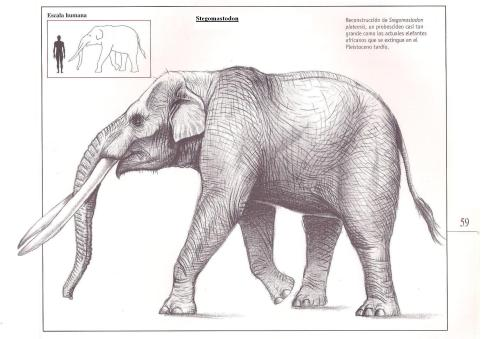 An illustration of a stegomastodon (from geologiadelparaguay.com)