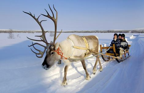 A reindeer sleigh in Lapland (image from the Finnish Tourism Bureau)