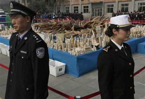 Authorities in Guangzhou with the captured ivory (which equals one fifth of the illegal ivory taken last year)