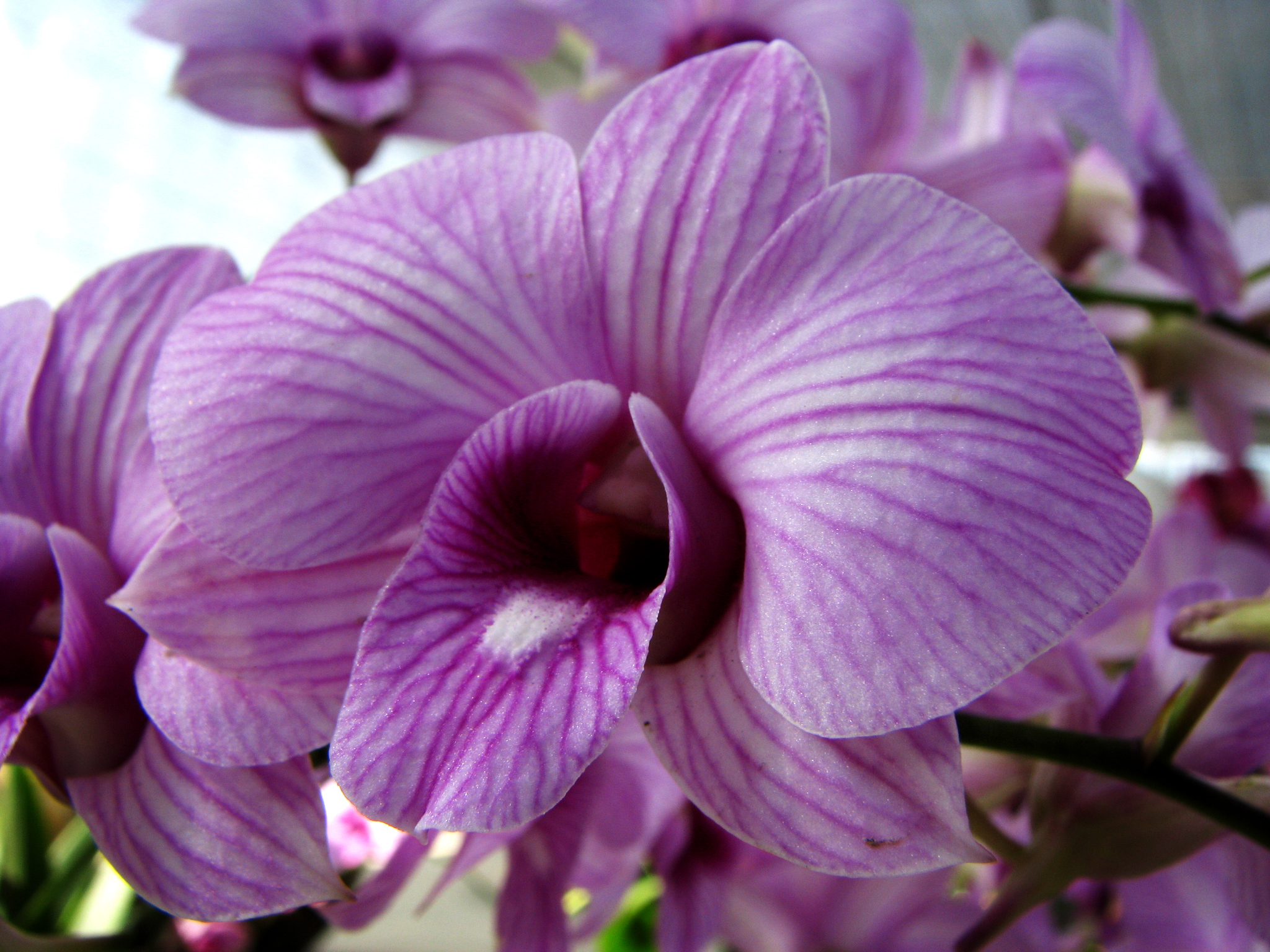 orchid | ferrebeekeeper